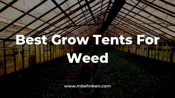Best Grow Tent Setup For Weed