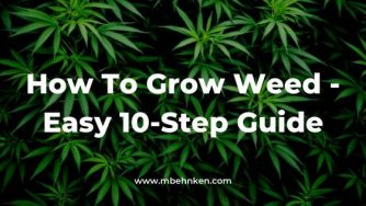 How To Grow Weed - Easy 10-Step Guide