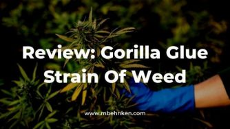 Review_ Gorilla Glue Strain Of Weed